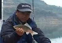 《鱼乐无限》2014 第26期 九尾连珠