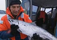 《極限釣魚》第二季 第2集 阿拉斯加州麻哈魚