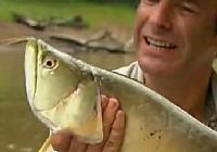 《极限钓鱼》第三季 第5集 巴西龙鱼巨骨舌鱼