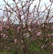 【钓技-钓大眼鳊鱼】春夏秋三季狂拉