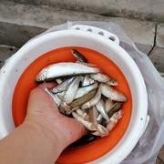 掌握这几个重点,钓小鱼变得很简单。