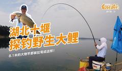 《白条杀手》探钓野钓大鲤鱼,黑漂扬竿一瞬间就打桩!