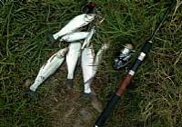 国务院出台可捕捞淡水鱼尺寸标准